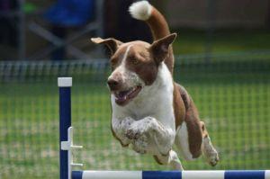Dodger jumping